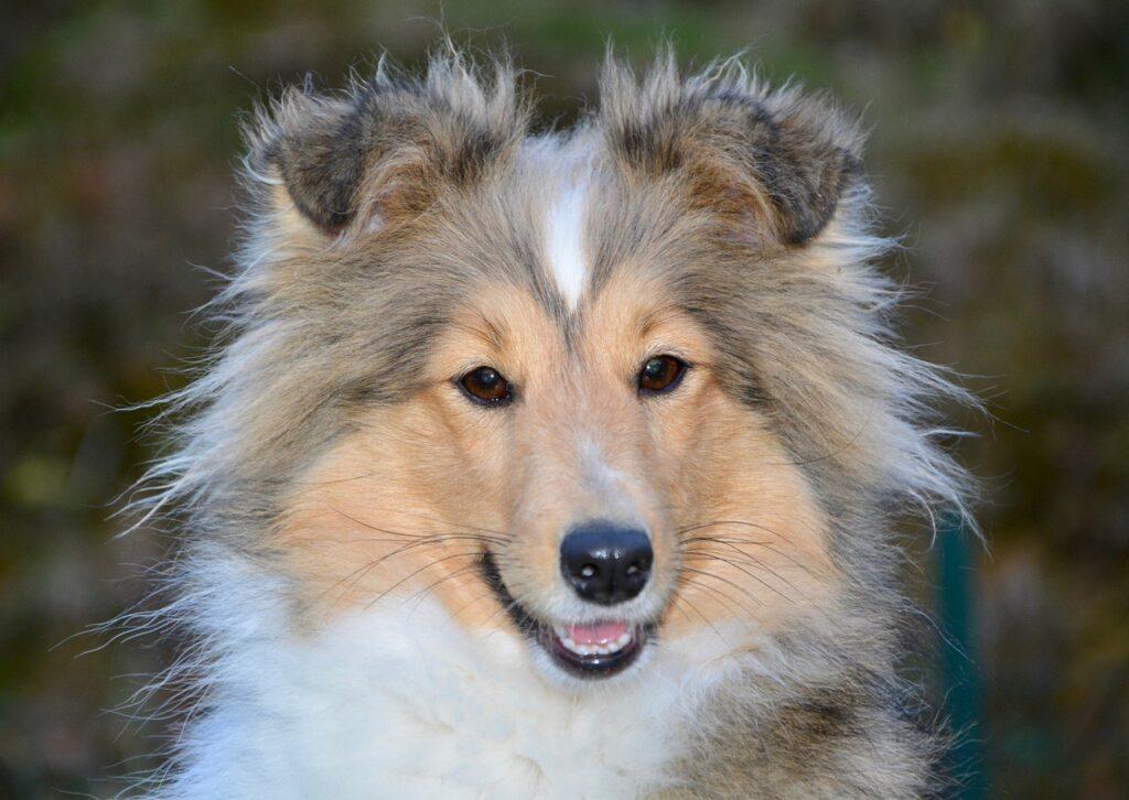 hundefoder fra Wolfsblut